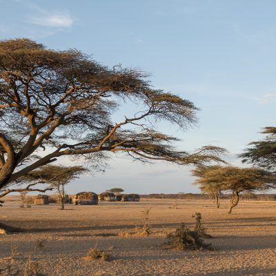 Trees in Kenya village houses
