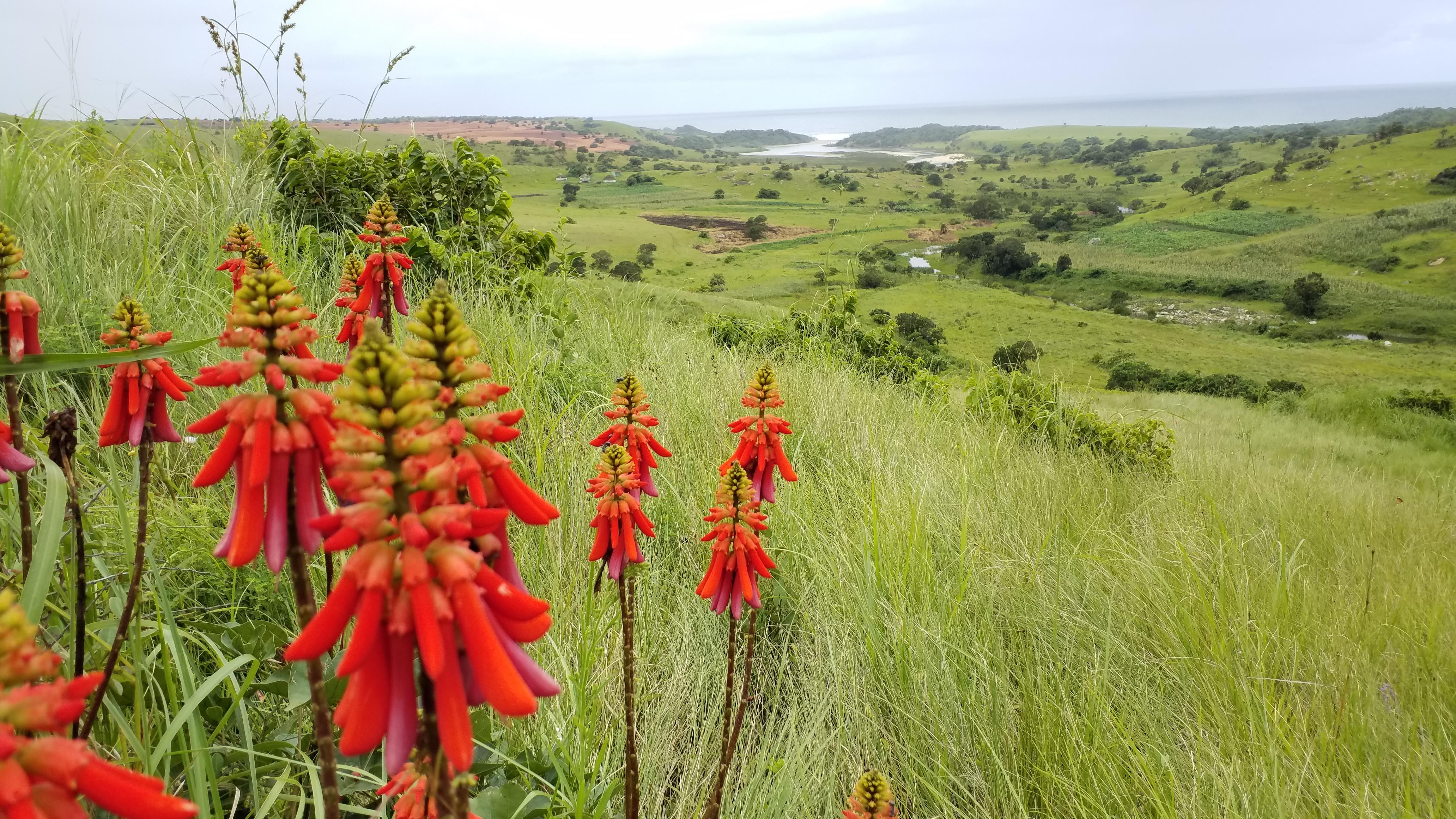 Amadiba Landscape